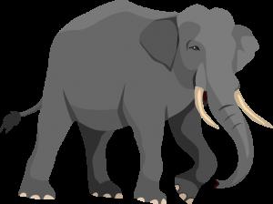 Timeline_elephant